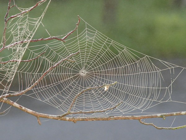800px-Spider_web_with_dew