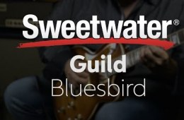 Guild Bluesbird Electric Guitar Review